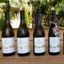 Viaggio in Alto Adige: i vitigni Piwi di Thomas Niedermayr