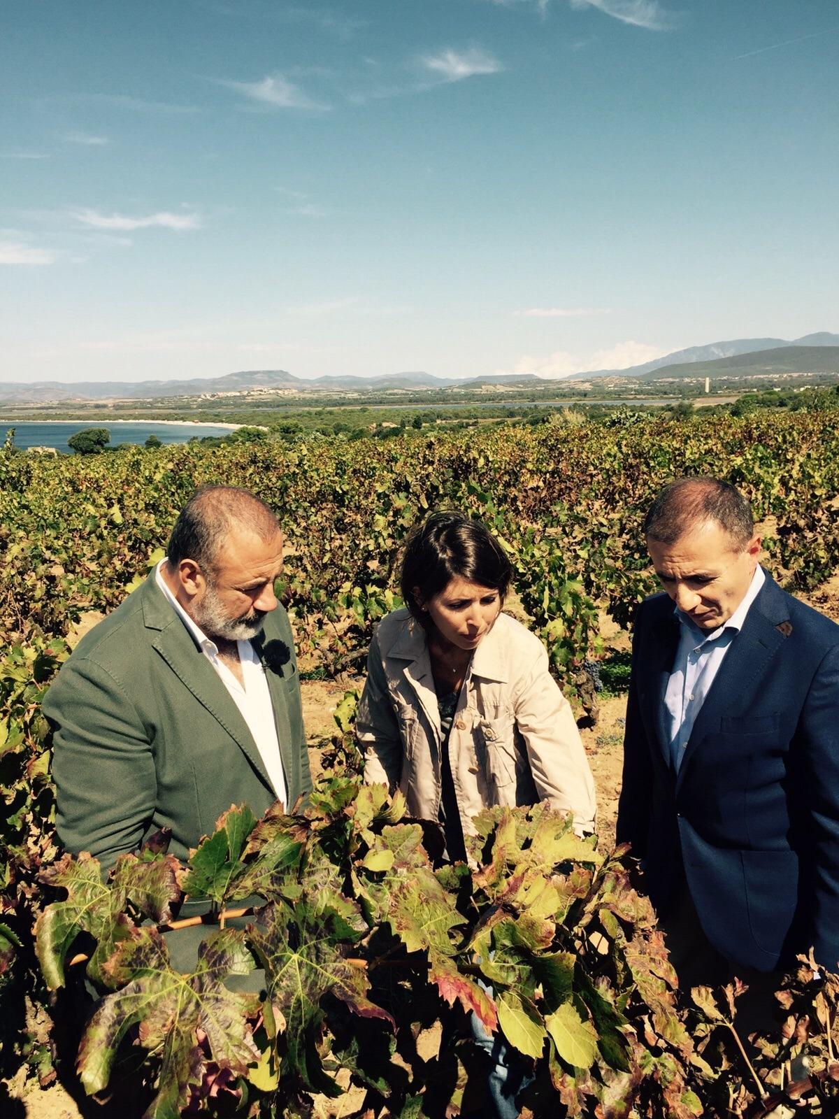 Signori del Vino - RAI2, la Sardegna