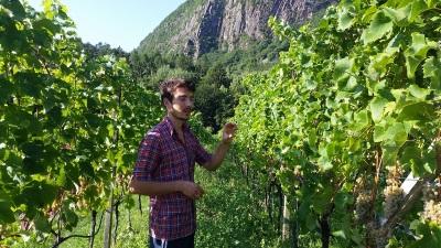 Rudolf Niedermayr e vitigni piwi dell'alto Adige