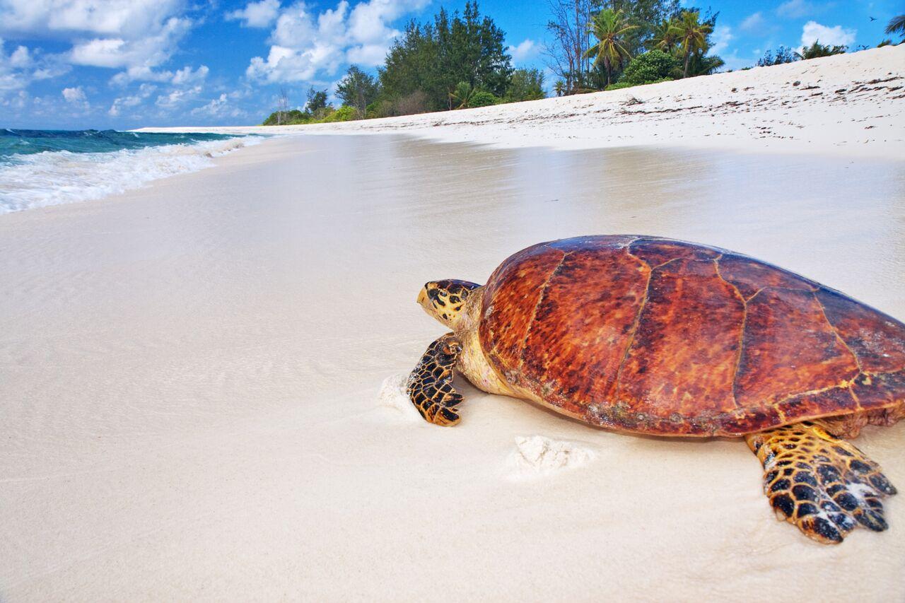 Un paradiso tropicale per tutti... i gusti