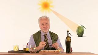 L'olio è una spremuta di olive