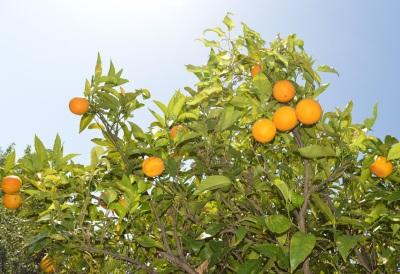 Calabria da scoprire: Trebisacce la meta ideale tra gli aranceti del Biondo e un mare Bandiera Blu