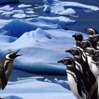 Continente Antartico, il più grande spazio incontaminato ancora esistente sul pianeta