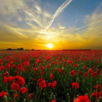 campo di fiori marche