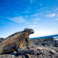 Alla scoperta dell'Arcipelago delle Galapagos