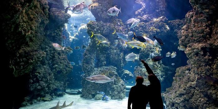 Museo oceanografico