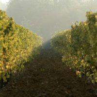La Scolca produttori vino a Gavi