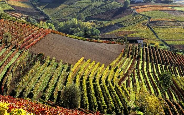 Evento vino e food nel Canavese e Monferrato