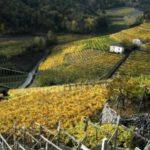 Valle di Cembra: il territorio, la gente, il vino