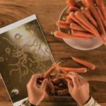 Video: Il mostro e la carota