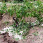 Maltempo Italia: in giugno già +28% pioggia, con grandine e trombe d'aria nei campi e nei vigneti