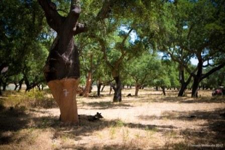 foresta di querce da sughero in Portogallo