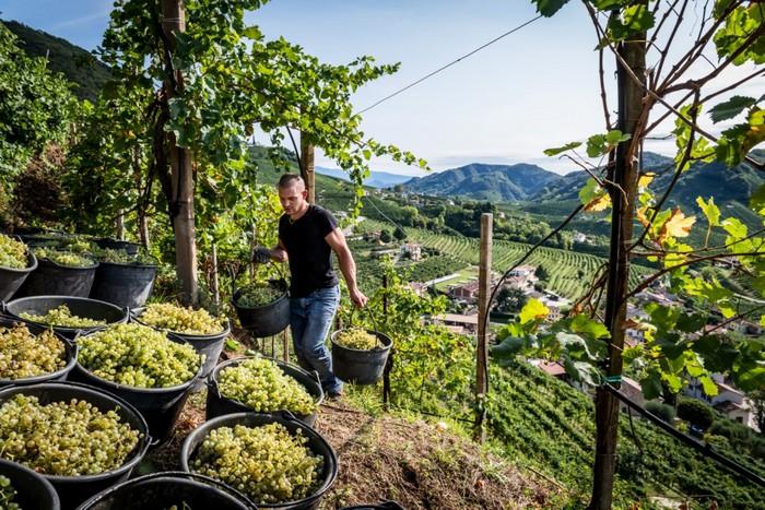 area più vocata alla coltivazione del Valdobbiadene Docg