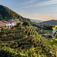 Weekend in Cantina 2020 nell'area vinicola di Conegliano Valdobbiadene