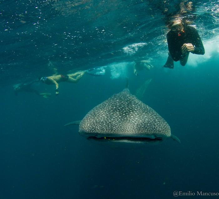 Viaggio WWF con squali balena