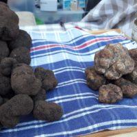 Nero Norcia, su il sipario sulla mostra mercato nazionale del tartufo