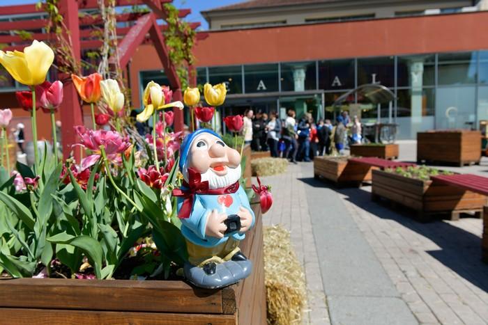 80 bulbi di tulipano di Messer Tulipano