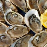 Eataly Lingotto eventi e attività di agosto