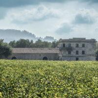 Vini della Rioja Marqués de Murrieta distribuiti da Sagna per l'Italia