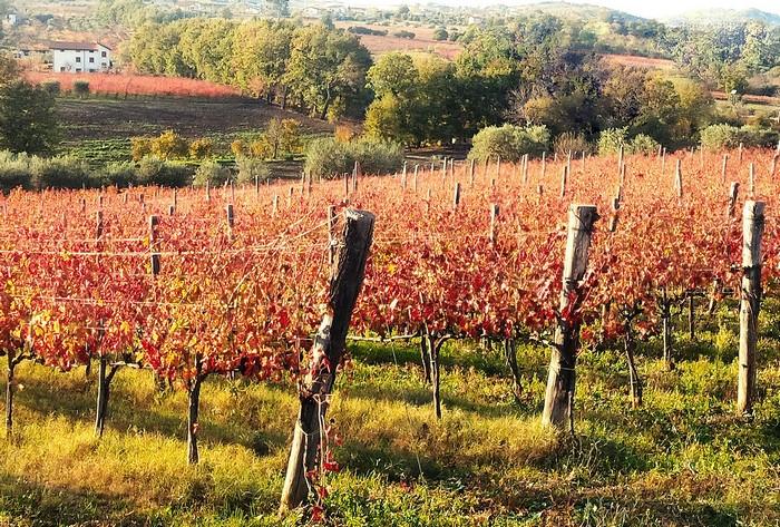 Le vigne dell'azienda Stefania Barbot