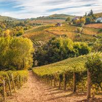 Terre di Moscato: in Piemonte un'esperienza sensoriale sui grandi vini aromatici