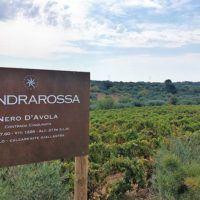 """Settesoli, 20 anni Mandrarossa, vini vulcanici sull'Etna e """"turismo sostenibile"""""""