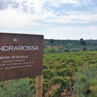 Mandrarossa vineyard tour