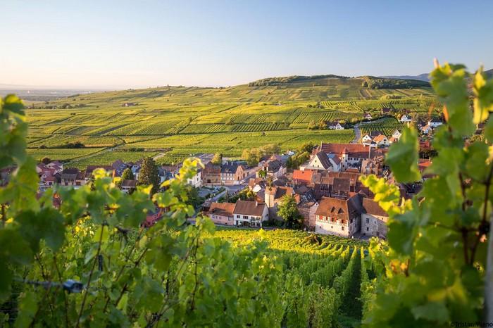 Via del vino in Alsazia