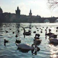 Praga, la città magica dov'è sempre Natale