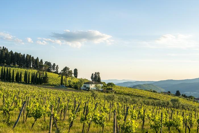 fattoria-lavacchio-vini-biologici-toscana