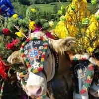 La folkloristica transumanza del bestiame, festa dei pastori e dell'artigianato