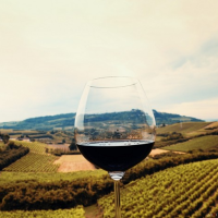 Gastronomix: Canavese e Monferrato Wine & Food