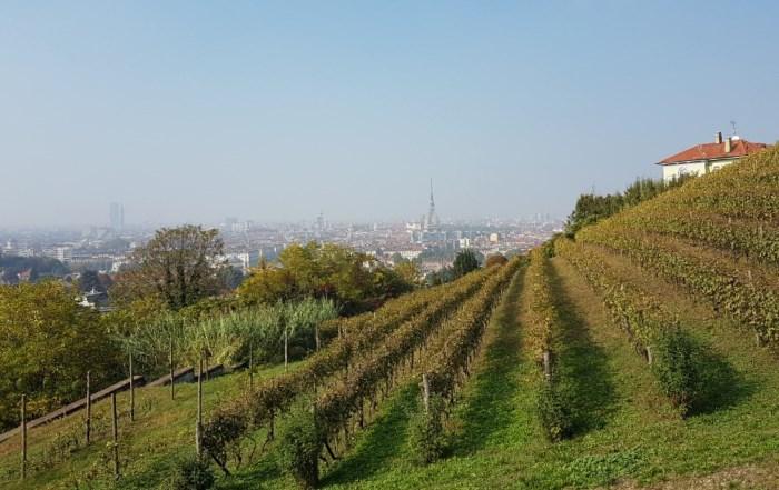 La Vendemmia a Torino | Grapes in Town 2018