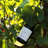 Monsieur Pinot Noir: un rosso d'eccellenza