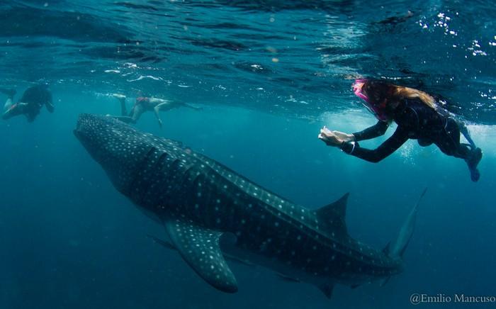 squalo balena con sub WWF