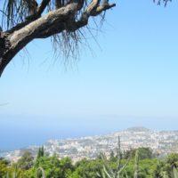 Madeira, vino, fiori, spezie e Joie de vivre