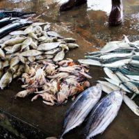 La cucina tradizionale e i prodotti tipici delle Isole Canarie