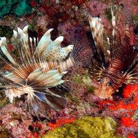 Seychelles: vivere una favola nell'Oceano Indiano