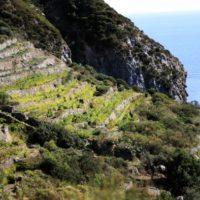 Viticoltura eroica, isola di Ponza