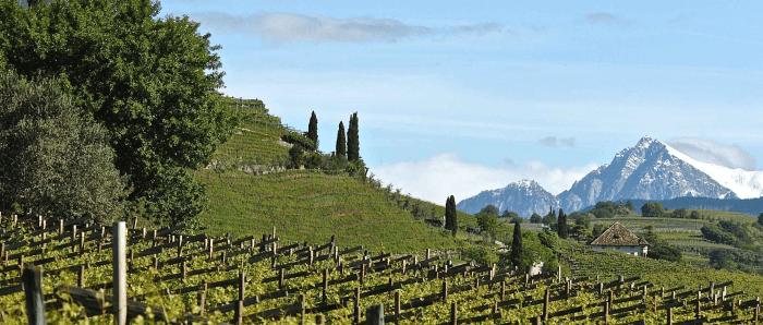 Tenuta vinicola Alois Lageder