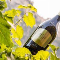 Troy, lo Chardonnay di montagna della Cantina Tramin