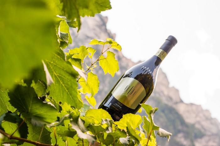 Troy di Tramin, Chardonnay