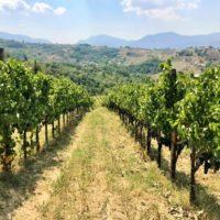 Colli di Castelfranci, la qualità è strategia di investimento