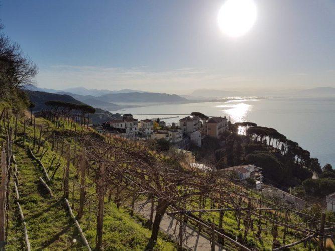 vigne Raito